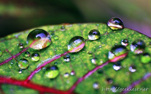 Macro of waterdrops on leaf