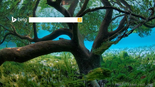 Mangrove seen from underwater, Aldabra - Seychelles
