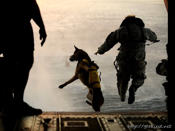 Most-elite-dogs-of-United-States-Military