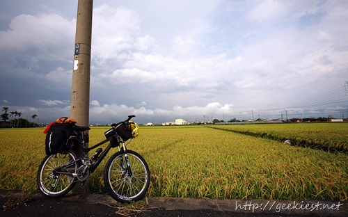 台東市郊稻田 (The Rice Fields at Taitung City)