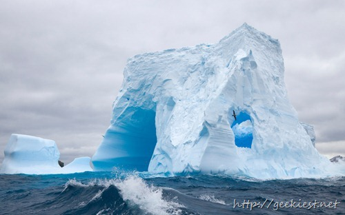 Blue iceberg dramatically sculpted by waves and melting action accelerated by global warming and climate change, and Southern giant petrel in flight, South Georgia Island, Southern Ocean, Antarctic Convergence, Polar Front