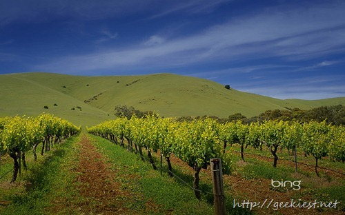 Vineyards at the back of Rowland Flat, Barossa Valley, South Australia, Australia