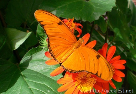 earth-day-photo-contest-winner-Butterfly