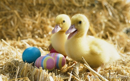 Pair of ducklings with colored eggs
