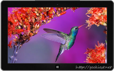 Windows 7 Themes - Beautiful Birds, Bees and Dogs in Winter