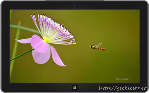 Bees theme for windows