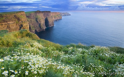 The Cliffs Of Moher in summer, with daisies growing on the cliff top. County Clare, Ireland